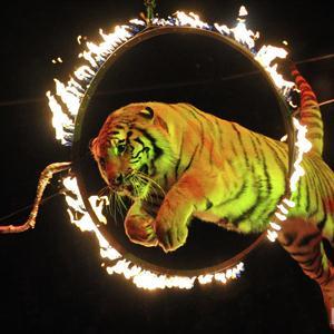 Цирки Тольятти