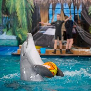 Дельфинарии, океанариумы Тольятти