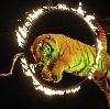Цирки в Тольятти