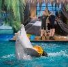 Дельфинарии, океанариумы в Тольятти